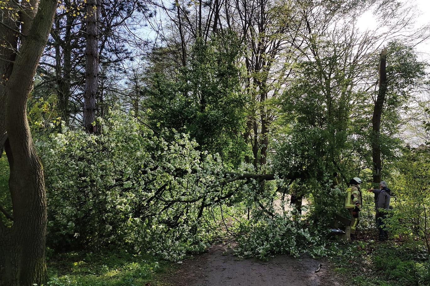 Baum blockiert Fußweg